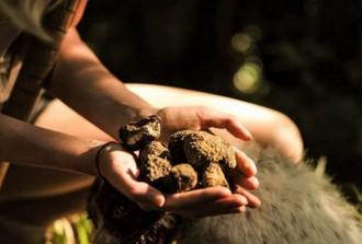 Cretan Truffle Hunting & Authentic Culinary with Cave of Zeus - Limo 3-seats Premium Class