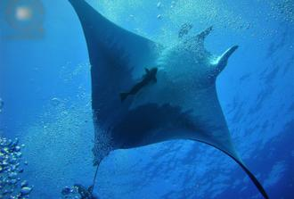 Manta Blue Spot Scuba Dive in Azores